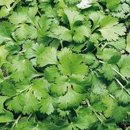Кин-дза-дза - семена кориандра, Гавриш/Gavrish (Россия), фото 1
