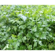 Тайга - семена петрушки, Гавриш/Gavrish (Россия), фото 1