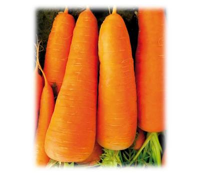 СВ 7381 ДЧ - семена моркови, 1 000 000 семян, (фр. от 1,6 до 2,0 мм и выше), Seminis/Семинис (Голландия), фото 1