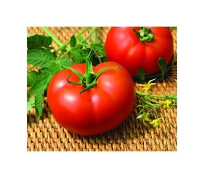 Мелодия F1 - томат индетерминантный, 500 и 1 000 семян, Seminis/Семинис (Голландия), фото 1