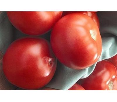 Флорида 47 Р  F1 - томат детерминантный, 1 000 семян, Seminis/Семинис (Голландия), фото 1