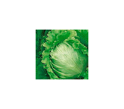 Сталлион - салат Айсберг, 5 000 семян, Seminis/Семинис (Голландия), фото 1