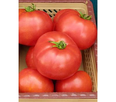 Элегро F1 - томат детерминантный, 1 000 семян, Seminis/Семинис (Голландия), фото 1