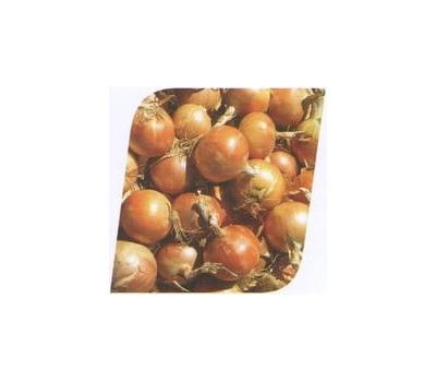 Замбези F1 - семена лука репчатого, 250 000 семян, Seminis/Семинис (Голландия), фото 1