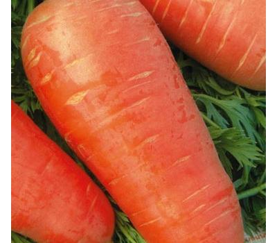 Кордоба F1 - семена моркови, 1 000 000 семян (прецизионные, фр. от 1,6 до 2,6 мм), Bejo/Бейо (Голландия), фото 1