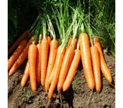 Карвора F1 - семена моркови, 1 000 000 семян, Seminis/Семинис (Голландия), фото 1
