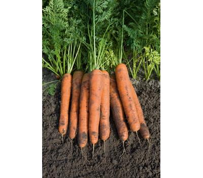 Намур F1 - семена моркови, 1 000 000 семян (прецизионные, фр. от 1,6 до 2,6 мм), Bejo/Бейо (Голландия), фото 1