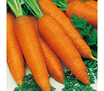 Ниланд F1 - семена моркови, 1 000 000 семян (прецизионные, фр. от 1,6 до 2,6 мм), Bejo/Бейо (Голландия), фото 1