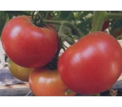Мирсини F1 - томат детерминантный, 1 000 семян, Seminis/Семинис (Голландия), фото 1