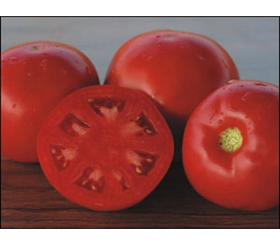 Платинум F1 - томат детерминантный, 1 000 семян, Nunhems/Нунемс (Голландия), фото 1