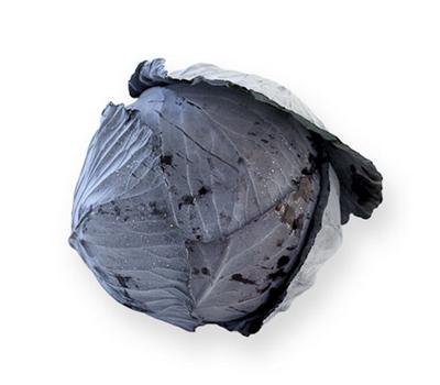 Родима F1 - капуста краснокочанная, 1 000 и 2 500 семян, Rijk Zwaan/Райк Цваан (Голландия), фото 1