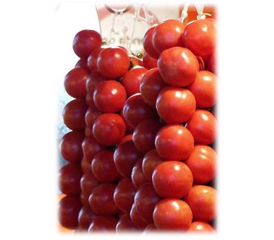 TO 1435 F1 - томат детерминантный, 1 000 семян, Seminis/Семинис (Голландия), фото 1