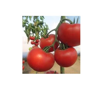 Диаграмма F1 - томат индетерминантный, 500 и 1 000 семян, Nunhems/Нунемс (Голландия), фото 1