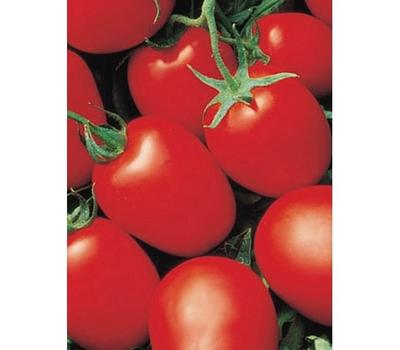 Яки F1 - томат детерминантный, 1 000 семян, Seminis/Семинис (Голландия), фото 1