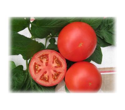 Портос F1 - семена томатов, 100 и 1 000 семян, Гавриш/Gavrish (Россия), фото 1