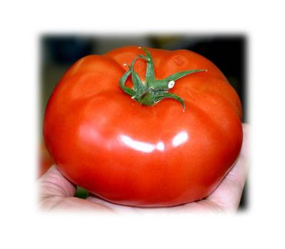 Таганка F1 - семена томатов, 100 и 1 000 семян, Гавриш/Gavrish (Россия), фото 1