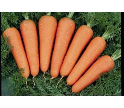 Каскад F1 - семена моркови, 1 000 000 семян (прецизионные, фр. от 1,6 до 2,6 мм), Bejo/Бейо (Голландия), фото 1