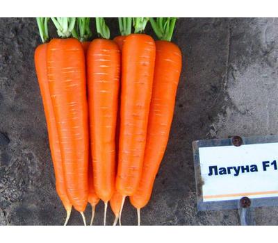 Лагуна F1  - семена моркови, 25 000, 100 000 и 1 000 000 семян, (фр. от 1,6 до 2,0 мм), Nunhems/Нунемс (Голландия), фото 1