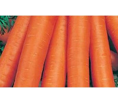 Ньюхол F1 - семена моркови, 1 000 000 семян (прецизионные, фр. от 1,6 до 2,6 мм), Bejo/Бейо (Голландия), фото 1