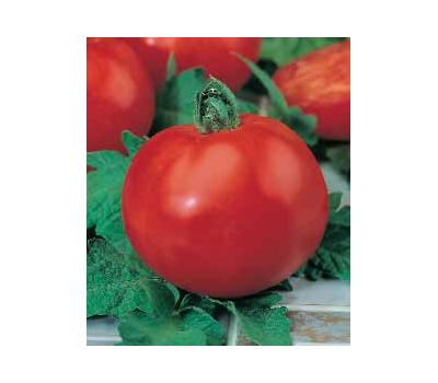 Полбиг F1 - томат детерминантный, 5гр., Bejo/Бейо (Голландия), фото 1
