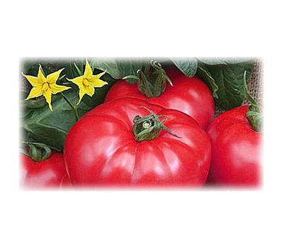 Турмалин - семена томатов, Гавриш/Gavrish (Россия), фото 1