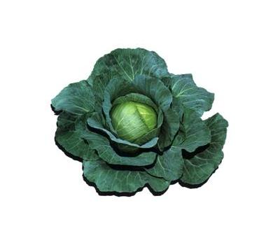 Роял Вантаж F1 -  семена капусты белокочанной, 2 500 семян, Sakata seeds/Саката сидз (Япония), фото 1