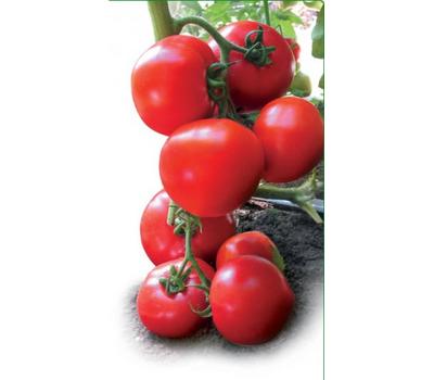 Ядвига F1 - семена томатов, Kitano seeds/Китано сидз (Япония), фото 1
