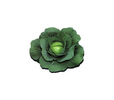 Шармант F1 - семена капусты белокочанной, 2 500 семян, Sakata seeds/Саката сидз (Япония), фото 1