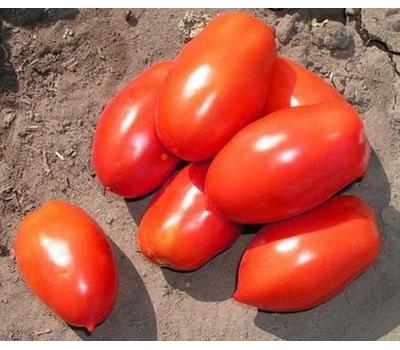 Инкас F1 - томат для переработки, 1 000 семян, Nunhems/Нунемс (Голландия), фото 1