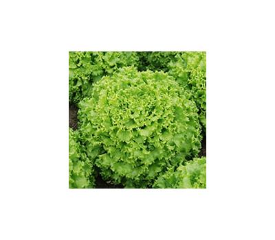 Эстони - семена салата Батавия, 5гр,  Enza Zaden/Энза Заден (Голландия), фото 1