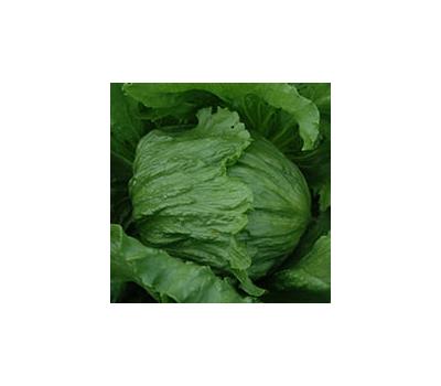 Этюд - семена салатов Айсберг, 5 000 шт., Enza Zaden/Энза Заден (Голландия), фото 1
