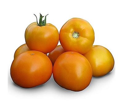 Гуальдино F1 - семена томатов, 250 семян, Enza Zaden/Энза Заден (Голландия), фото 1