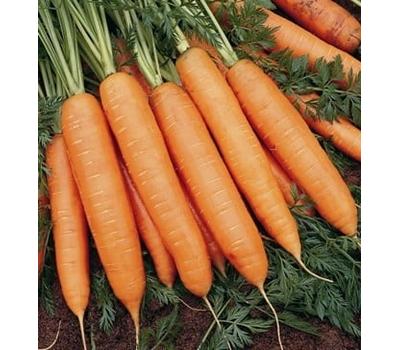 Бангор F1 -семена моркови, 1 000 000 семян (прецизионные, фр. от 1,6 до 2,6 мм), Bejo/Бейо (Голландия), фото 1