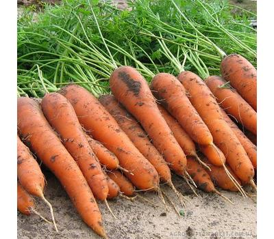 Элеганс F1 -  семена моркови, 100 000 и 1 000 000 семян, (фр. от 1,4 до 2,4 мм), Nunhems/Нунемс (Голландия), фото 1