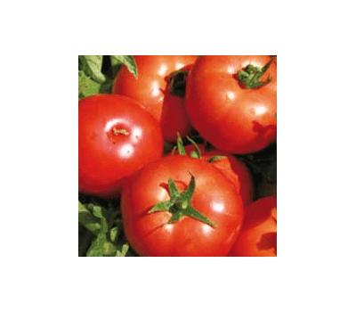 Имран F1 -  семена томатов, 1 000 семян, Enza Zaden/Энза Заден (Голландия), фото 1