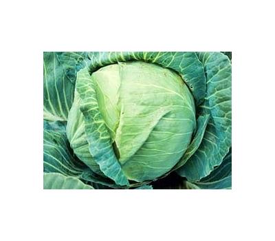 Килатон F1 - капуста белокочанная, 2 500 семян, Syngenta/Сингента (Голландия), фото 1