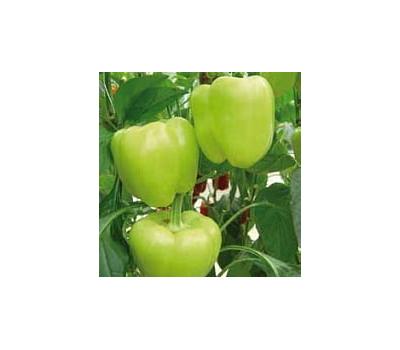 Лозорно F1 - семена перца сладкого, 500 семян, Enza Zaden/Энза Заден (Голландия), фото 1