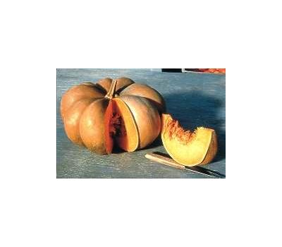 Муск де Прованс -  семена тыквы, 100 гр, Enza Zaden/Энза Заден (Голландия), фото 1