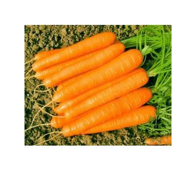 Романс F1 -  семена моркови, 100 000 и 1 000 000 семян, (фр. 1,6 - 1,8 мм), Nunhems/Нунемс (Голландия), фото 1