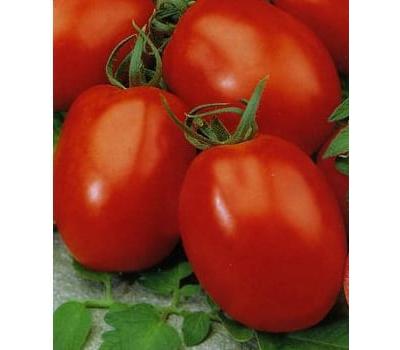 Индио  F1 - семена томатов, 1 000 семян, Sakata seeds/Саката сидз (Япония), фото 1