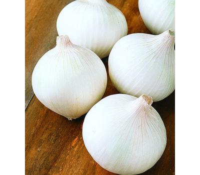 Вайт Винг F1 - семена лука репчатого (белый), 250 000 семян (Bejo/dGS прецизионные), Bejo/Бейо (Голландия), фото 1