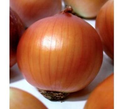 Бонус F1 - лук репчатый, яровой, 250 000 семян, Takii Seed/Таки Сидс (Япония), фото 1
