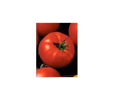 Президент II F1 - семена томатов, 500 и 1 000 семян, Seminis/Семинис (Голландия), фото 1