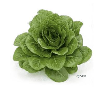 Аувона - салат Ромэн, 1 000 и 5 000 семян драже, Rijk Zwaan/Райк Цваан (Голландия), фото 1