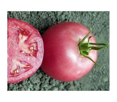 Пинк Уникум F1 - томат индетерминантный, 500 и 1 000 семян, Seminis/Семинис (Голландия), фото 1