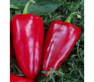 Богатырь F1 - семена перца сладкого, 50 и 500 гр, Поиск, фото 1