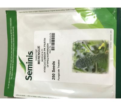Меренга F1 - огурец партенокарпический, 50, 250 и 1 000 семян, Seminis/Семинис (Голландия), фото 2