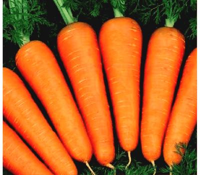 Абако F1 - семена моркови, 1 000 000 семян, (фр. от 1,6 до 2,0 и выше), Seminis/Семинис (Голландия), фото 1
