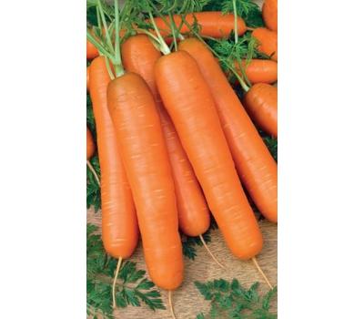Самсон - семена моркови, 500 гр., Bejo/Бейо (Голландия), фото 1