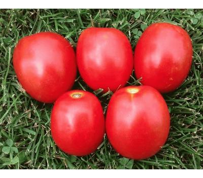 Гюзель F1 - семена томатов, 1 000 семян, Sakata seeds/Саката сидз (Япония), фото 1